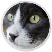 Round Beach Towel featuring the photograph My Sweet Boy by Heidi Smith