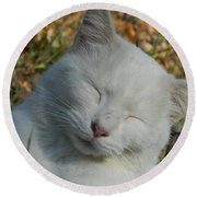 Round Beach Towel featuring the photograph Napping Barn Cat by Kathy Barney