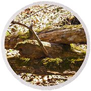 Round Beach Towel featuring the photograph Natures Fence by Nick Kirby