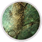 Natures Past Captured In A Web Round Beach Towel