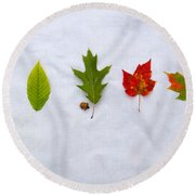 Needle And Leaf Comparison Round Beach Towel