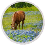 Nelly Grazing Among The Bluebonnets Round Beach Towel