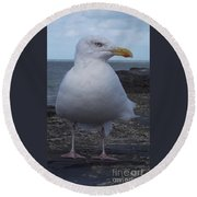 New Quay Gull  Round Beach Towel