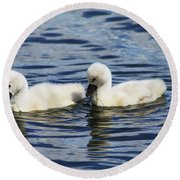 Round Beach Towel featuring the photograph Newborn Mute Swans by Alyce Taylor
