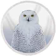 Nh Seacoast Snowy Owl  Round Beach Towel