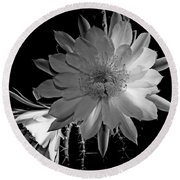 Nightblooming Cereus Cactus Flower Round Beach Towel