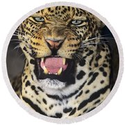 Round Beach Towel featuring the photograph No Solicitors African Leopard Endangered Species Wildlife Rescue by Dave Welling