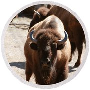 North American Bison Round Beach Towel by DejaVu Designs