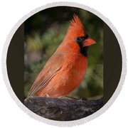 Northern Cardinal 2 Round Beach Towel