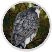 Northern Goshawk Round Beach Towel