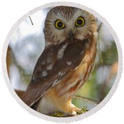 Northern Saw-whet Owl Round Beach Towel