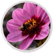 Nosy Bumble Bee Round Beach Towel