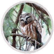 Northern Saw-whet Owl 2 Round Beach Towel