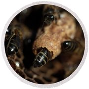 Nurse Bees Take Care Of A Queen Bee Egg Round Beach Towel