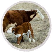 Round Beach Towel featuring the photograph Nursing Calf by Michael Chatt