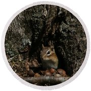 Round Beach Towel featuring the photograph Nut Therapy  by Neal Eslinger