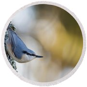 Nuthatch In The Classical Position Round Beach Towel