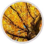 Oak In The Fall Round Beach Towel by Mike Ste Marie