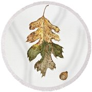 Round Beach Towel featuring the painting Oak Study by Michele Myers
