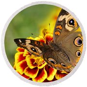 Round Beach Towel featuring the photograph October Garden by Nava Thompson