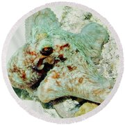 Round Beach Towel featuring the photograph Octopus On The Reef by Amy McDaniel