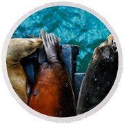 Odd Man Out California Sea Lions Round Beach Towel