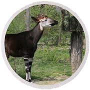 Okapi Round Beach Towel by Judy Whitton