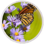 Old Butterfly On Aster Flower Round Beach Towel