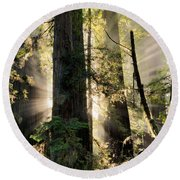 Old Growth Forest Light Round Beach Towel