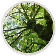 Old Growth Tree In Forest Round Beach Towel