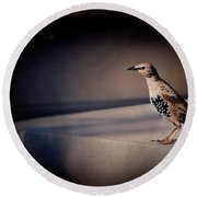 Round Beach Towel featuring the photograph On Guard by Kristi Swift