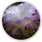 Round Beach Towel featuring the photograph On The Edge by Lucinda Walter
