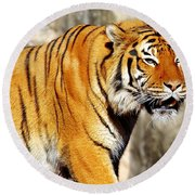 On The Prowl Round Beach Towel by Jason Politte