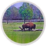 One Bison Family Round Beach Towel
