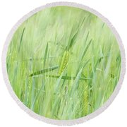 One Cob Among Others Round Beach Towel