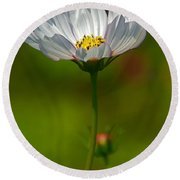 Round Beach Towel featuring the photograph Open For All by Byron Varvarigos