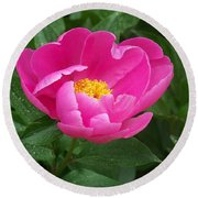 Round Beach Towel featuring the photograph Peony  by Eunice Miller