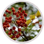Orange Autumn Berries Round Beach Towel