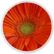 Orange Gerber Daisy Round Beach Towel
