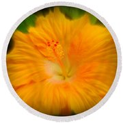 Round Beach Towel featuring the photograph Orange Hibiscus Flower by Clare Bevan