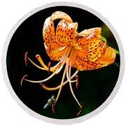 Orange Lily - Lilium Kelleyanum Round Beach Towel