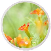 Round Beach Towel featuring the photograph Orange Meadow by Ann Lauwers