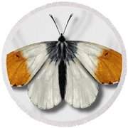 Orange Tip Butterfly - Anthocharis Cardamines Naturalistic Painting - Nettersheim Eifel Round Beach Towel