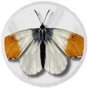 Orange Tip Butterfly - Anthocharis Cardamines Naturalistic Painting - Nettersheim Eifel Round Beach Towel