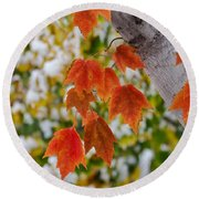 Round Beach Towel featuring the photograph Orange White And Green by Ronda Kimbrow