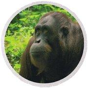Round Beach Towel featuring the photograph Orangutan by Dennis Baswell