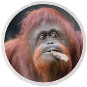 Orangutan Portrait Round Beach Towel by Dan Sproul
