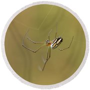 Round Beach Towel featuring the photograph Orchard Spider by Greg Allore
