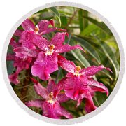 Orchid - A Pleasant Surprise  Round Beach Towel