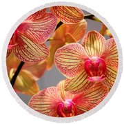 Orchid Round Beach Towel by Judy Palkimas